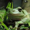 FrogGirl