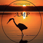 AMP  Al Melville Photography