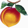 PeachPark