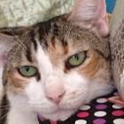 Catgirl2013