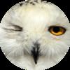 owlspook