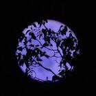 LavenderMoon