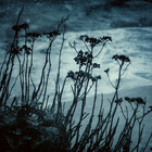 Caroline Benzies Photography