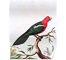 Tabuan Parrot Illustration Poster