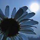 To The Sun by Marina Herceg