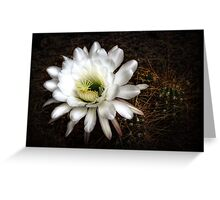 Torch Cactus - Echinopsis Candicans Greeting Card