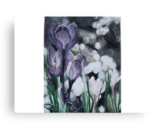 A Lavender Dream. Canvas Print