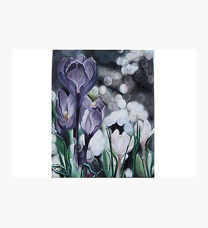 A Lavender Dream. Photographic Print