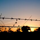 Barbed morning by Carol Ferbrache