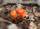 Fairy Mushroom by Eileen McVey