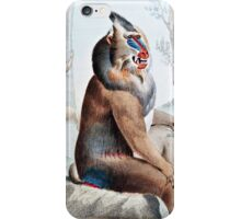 Variegated Baboon Vintage Art iPhone Case/Skin