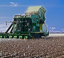 Cotton picking by gamaree L
