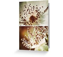 Spring - Roses - Wild at Heart Greeting Card