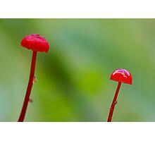 Red Mushrooms Photographic Print