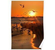 Sunset Birding Poster