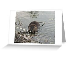 Willow Bark Salad for Lunch - Baby Beaver Greeting Card