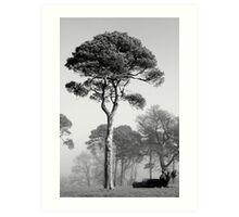 Tree Ireland B+W Art Print