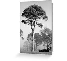 Tree Ireland B+W Greeting Card