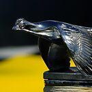 Rad Bird by Lee Donavon Hardy