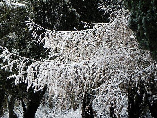 Winter is here-argh! December 2010 by Eileen O'Rourke
