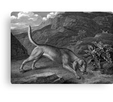 Bloodhound in Black and White Canvas Print