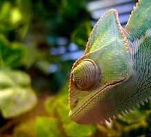 Green Chameleon by mongogushi