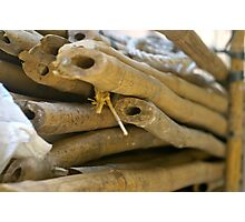 Bamboo II Photographic Print