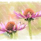 Echinacea by Sarahbob