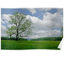 A Pastoral Nature Shot on a Great Day Poster