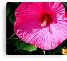 Pink   ^ Canvas Print