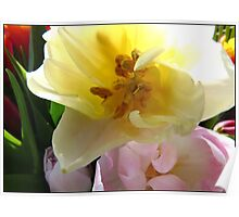 Still Life  of Tulips Poster
