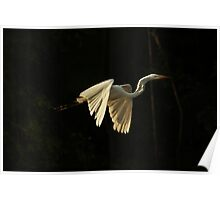 Great White Heron Poster