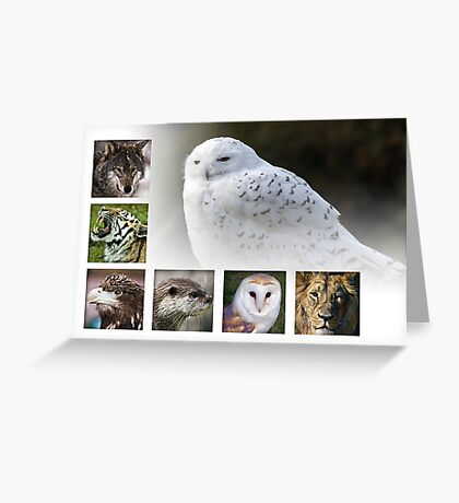 Wild collection Greeting Card