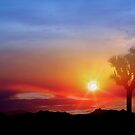 Joshua Tree Sunset by Cleber Design Photo