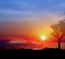 Joshua Tree Sunset by Cleber Photography Design