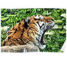 AMUR TIGER ~ Endangered Poster