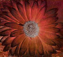 Digital Daisy by BPhotographer