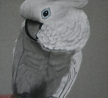 An Umbrella Cockatoo by Rebecca Lee Means