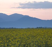 rapeseed field with Kamnik Alps in the background by Ian Middleton