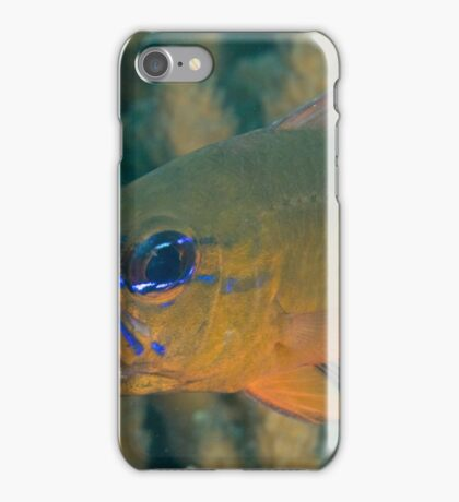 Cardinalfish with Eggs iPhone Case/Skin
