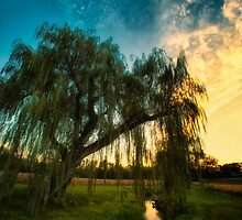 Weeping Willow Tree Sunset by KellyHeaton