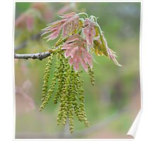 Weeping Willow Blossoms  Poster