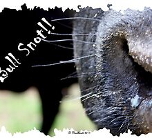 Bull Snot!! - Not just an exclamation anymore! by Betty Northcutt