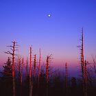 MOONRISE,CLINGMANS DOME by Chuck Wickham