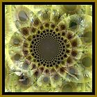 Opaque Sunflower by Sheryl Gerhard