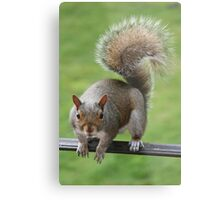 Hey! I'm waiting! Out here! For a peanut! NOW! Metal Print
