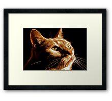 Cat Contemplation Framed Print