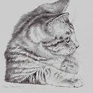 Curious Kitten by Pam Humbargar