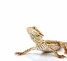 Large Bearded Dragon - pogona vitticeps by Linda Swadling