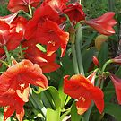 Amaryllis flowers by a tree by ♥⊱ B. Randi Bailey